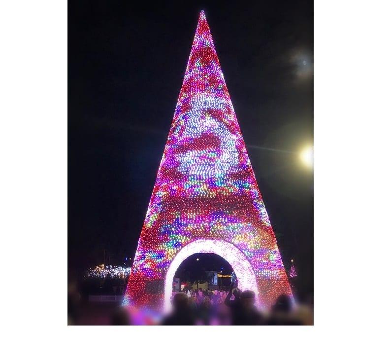 Christmas Tree Wonderland Bournemouth Coastal Bid.Christmas Tree Wonderland Dorset Tourism Association